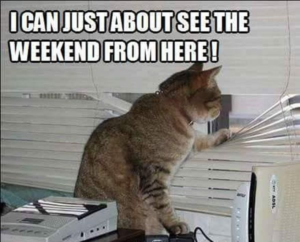 cat-humor-i-can-just-see-weekend-from-here